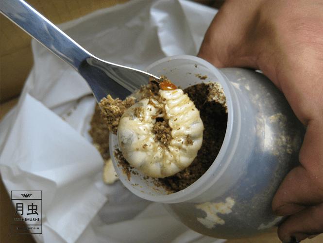 菌糸ビン 交換