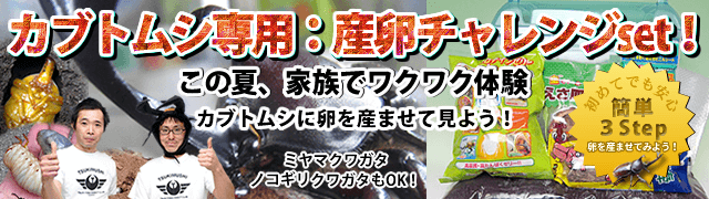 カブトムシ専用 産卵チャレンジset