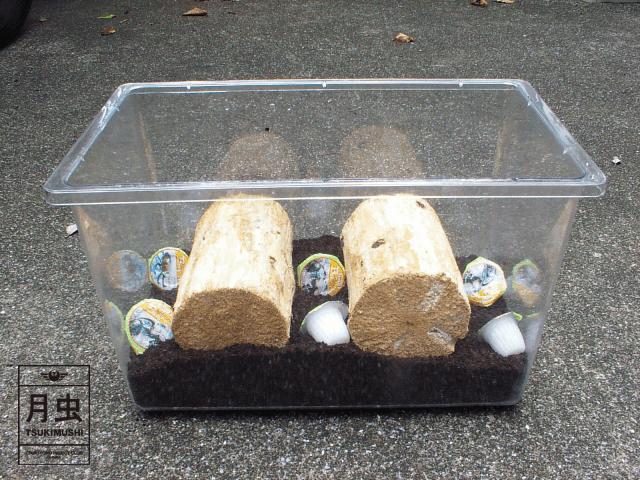 材産卵セット