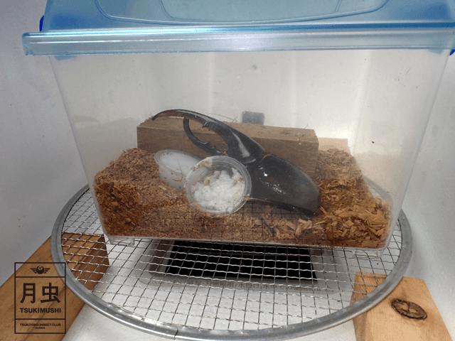 クワガタやカブトムシ飼育時の温度管理について。その方法をご紹介します!