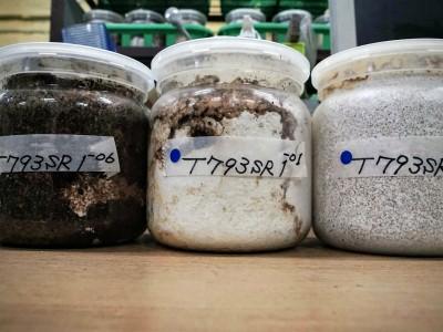 菌糸ビンとは?クワガタ幼虫の定番飼育アイテム